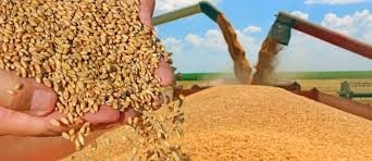 Grain Industry Products