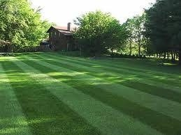 Turf Grass Industry